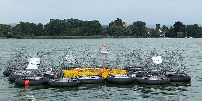 Eco-evolutionary dynamic in the Greifensee (Photo: Eawag)