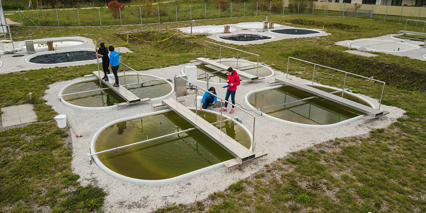 Ecosystem Stability in Ponds (Photo: Thomas Klaper)