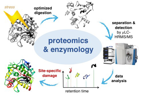 Title: Proteomics Workflow; Source: E. Janssen and Chr. Egli