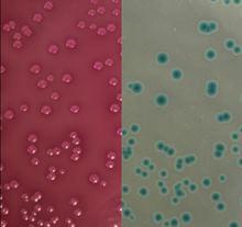 pathogens-and-human-health
