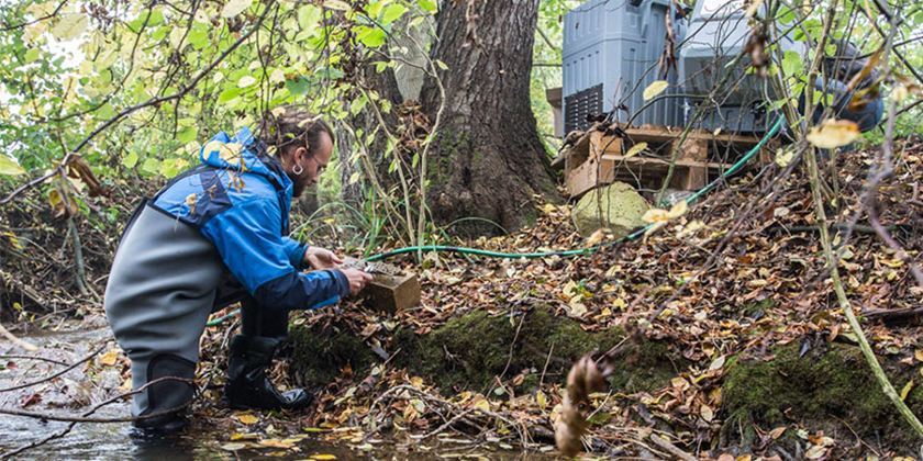 Sampling in the Eschelisbach, a stream in the canton of Thurgau (Photo: Esther Michel, Eawag)