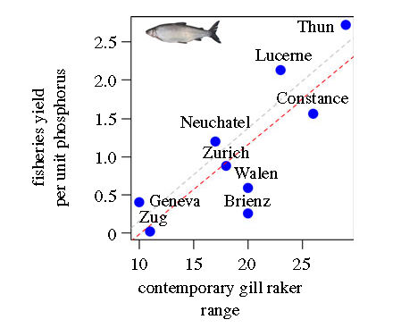 Correlation between whitefish yield per unit phosphorus (y axis) and the range of gill raker numbers