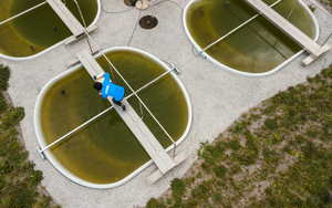Anita Narwani takes a water sample from one of the ponds. (Photo: Thomas Klaper)