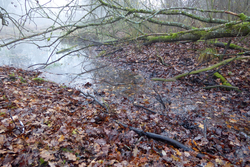 Leaf litter from surrounding thickets and woods is an important source of carbon for rivers.  (Photo: Florian Altermatt)