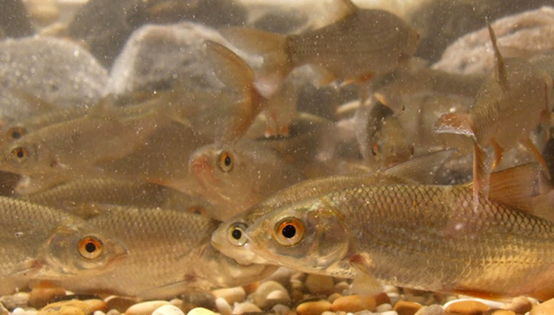 Department Fish Ecology & Evolution - Eawag