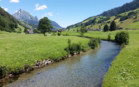 Environmental DNA samples were analysed at various locations in the River Thur (pictured in upper Toggenburg) in order to make subsequent predictions of the biodiversity of aquatic insects (Photo: Eawag, Elvira Mächler/Chelsea Little/Florian Altermatt)