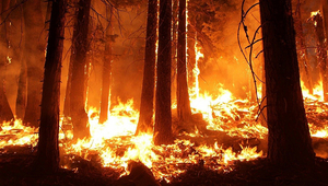 Forest fires, droughts or tropical storms are just a few examples of environmental disturbances. (Photo: Pixabay)