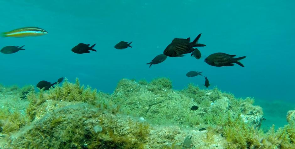 evolutionary-biodiversity-dynamics