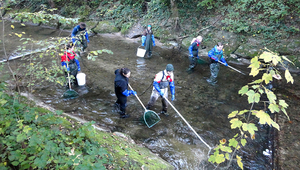 Fish sampling at river Wigger (photo: EPFL)