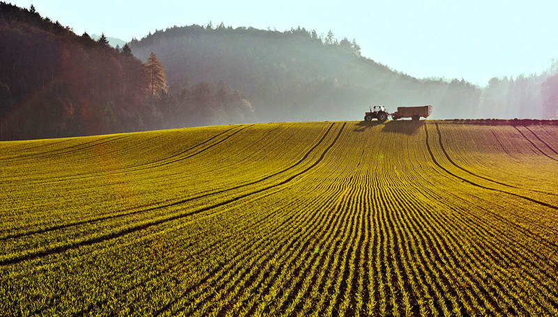 Many years after pesticides are applied, residues can still be detected in soils. (Photo: Markus Bolliger, FOEN)