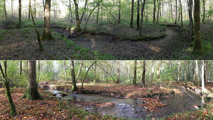 Sometimes dry, sometimes flooded: bodies of flowing water that do not carry water permanently contribute considerably to global CO2 turnover. (B. Launay)