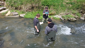 Trout were caught and studied in various brooks above and below wastewater treatment plants in order to determine whether and how they react to harmful chemicals (Photo: Eawag).