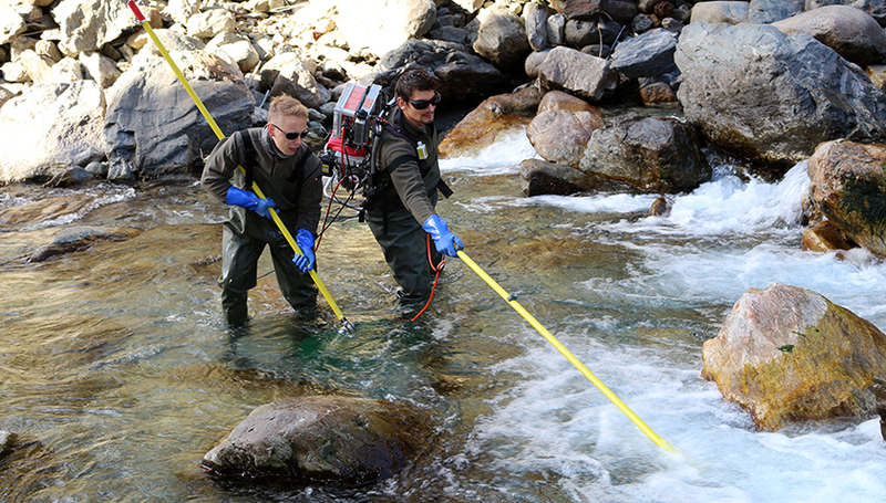Fig.1: Scientists use electro-fishing to catch trout for their experiments. Photo: Petra Nobs, Eawag