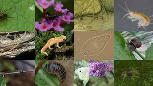 Range of species used in the experimental protocol of the study on the dispersion of species. (Images: Julien Cote)